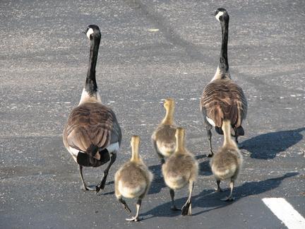 Walk_on_babies