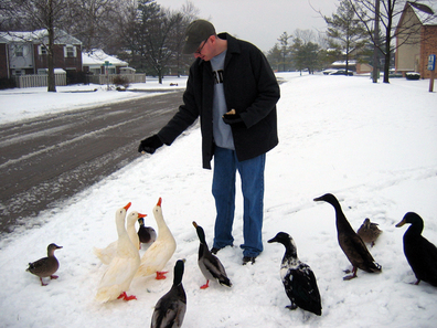 Luke_snow_ducks_2